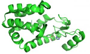lysozym